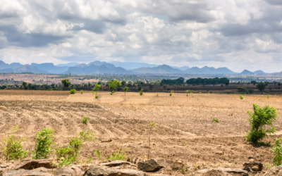 Gendered migration responses to drought in Malawi